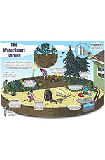 Watersmart in the Garden