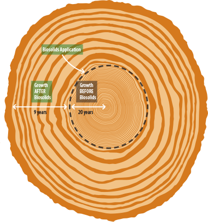 Comparison of tree growth rings